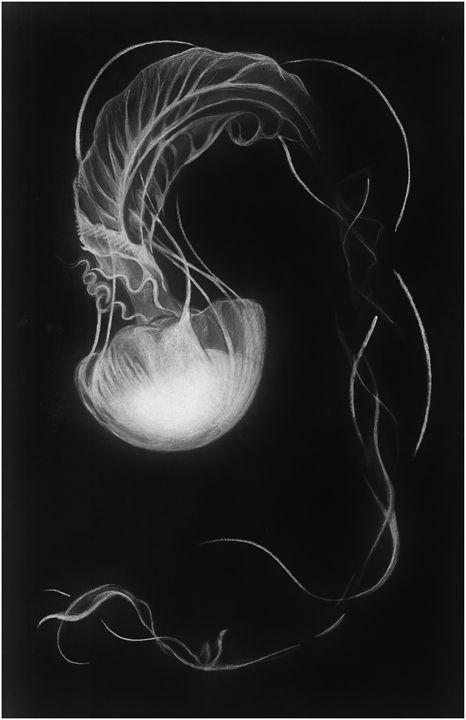 Jellyfish - Zan Schaefer Art