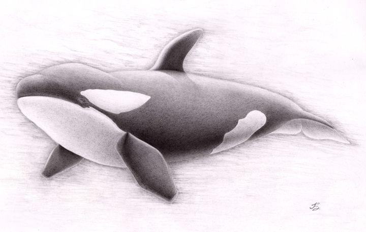Orca - Joel Andrés Leppe Estrada