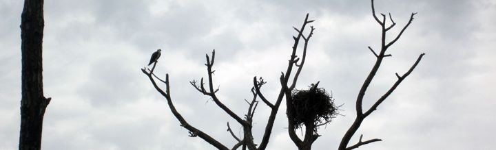 Bird and nest with tree - francine mabie