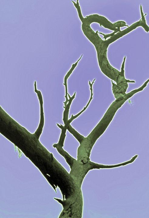 Green Glow Tree - francine mabie