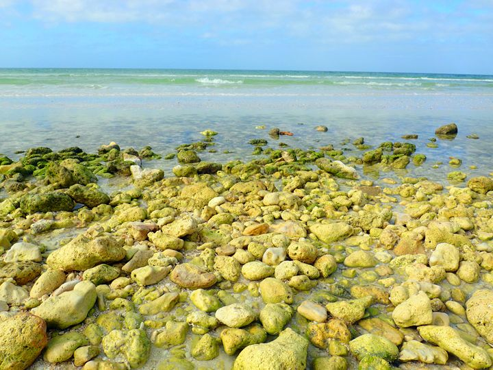 Green Rocks with moss - francine mabie