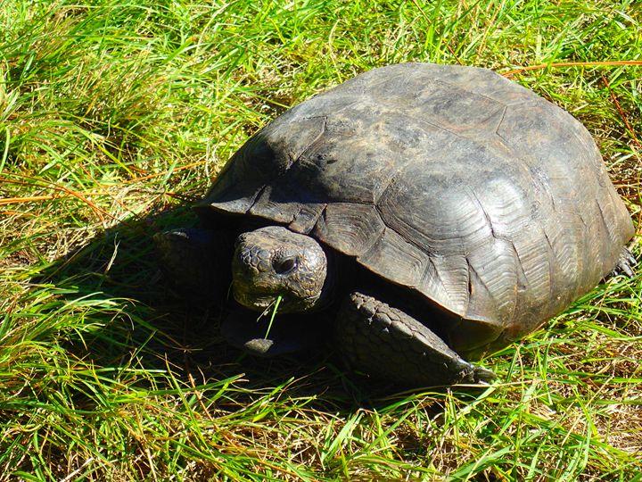 Big turtle - francine stuart