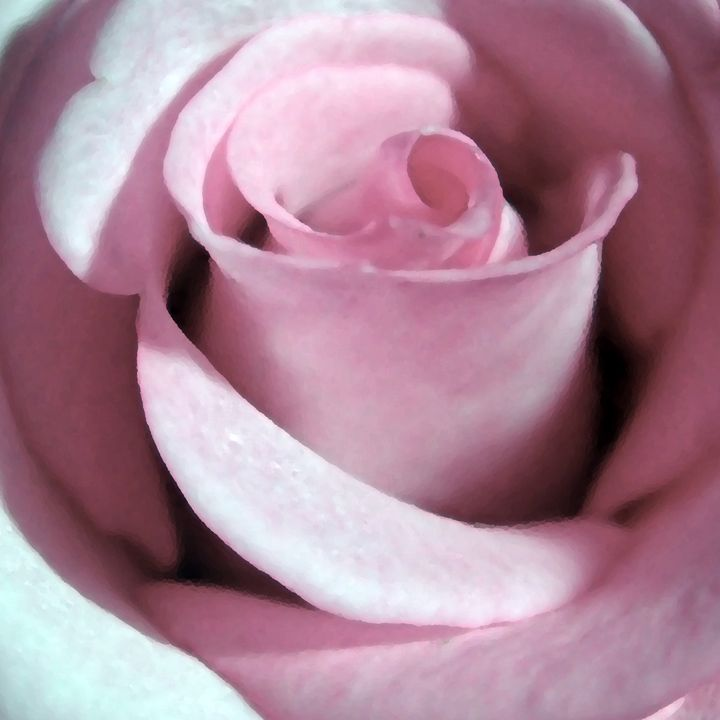 Victoria Rose - francine mabie