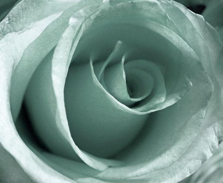 Lacey Rose - francine mabie