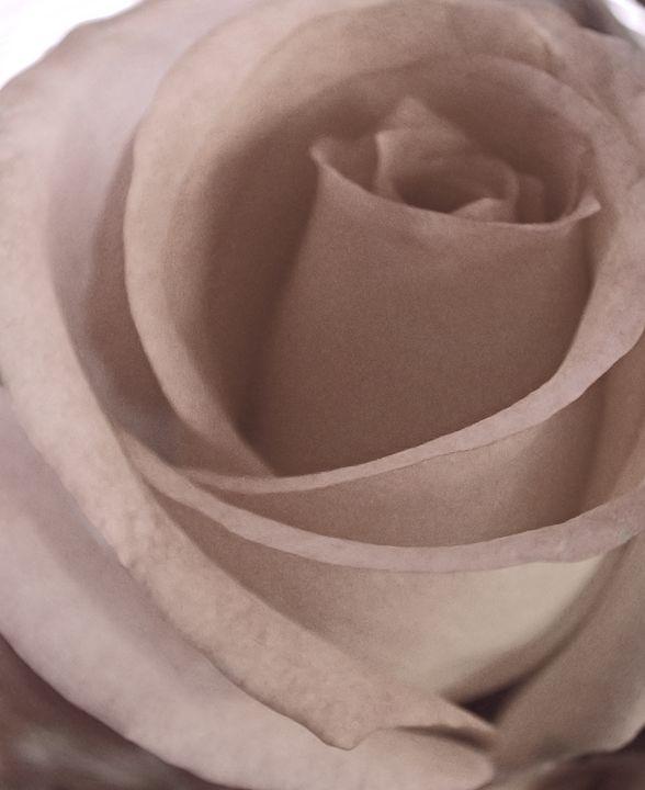 Rose For Ragusa - francine mabie