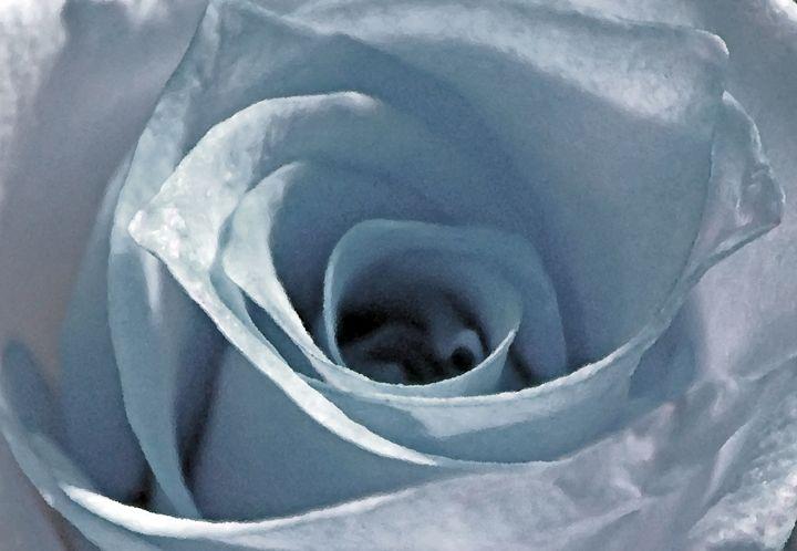 Ice Blu Rose - francine mabie
