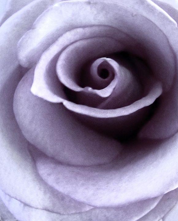 Earl Rose - francine mabie