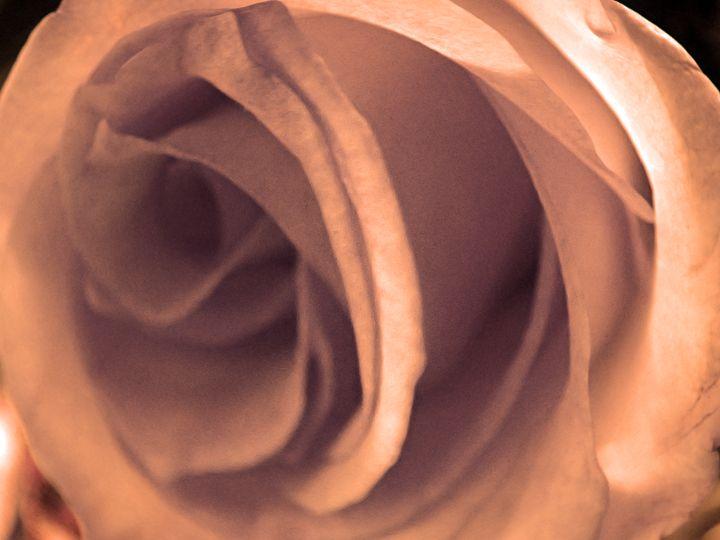Sunset Rose - francine mabie
