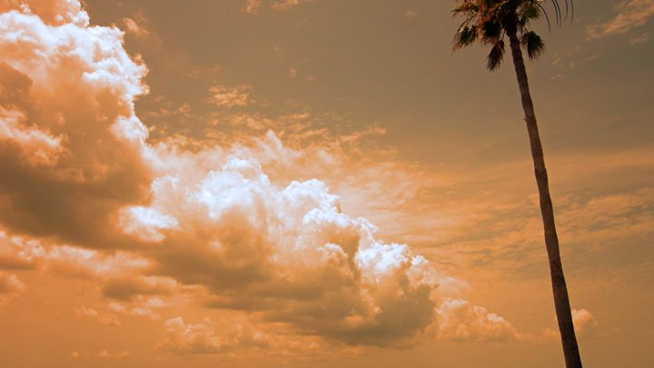 Clouds of warmth with palm tree - francine mabie