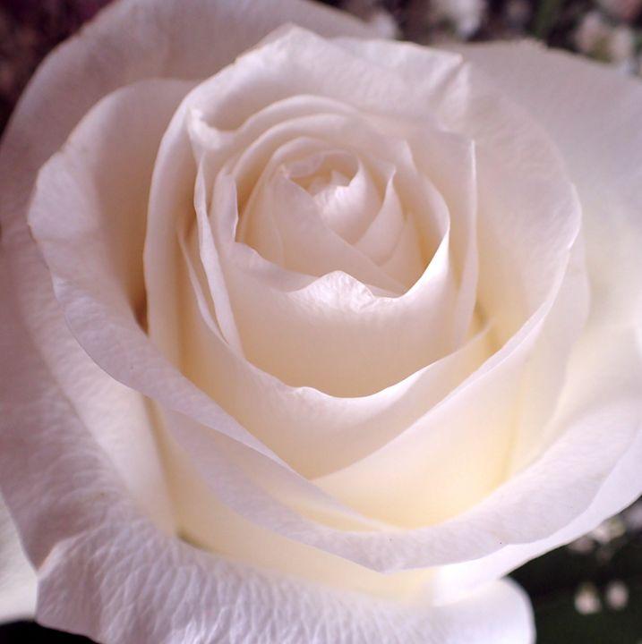 Pale Pink - francine mabie