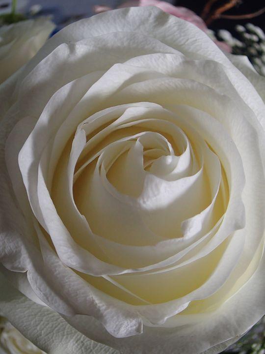 Liz Rose - francine mabie