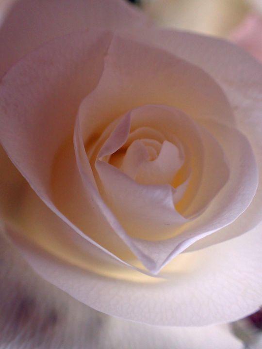Rose Rose - francine mabie