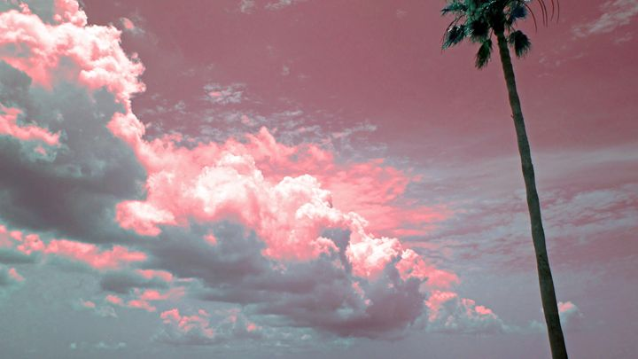 Clouds of pink with a palm - francine mabie