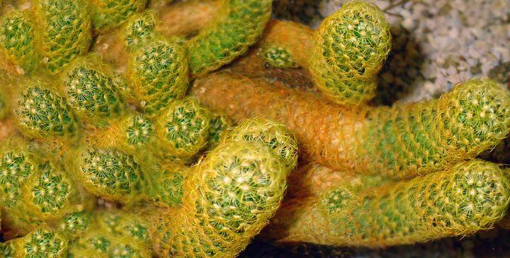 Focus On Cactus - francine mabie