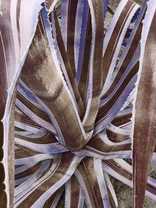 Neutral Cactus