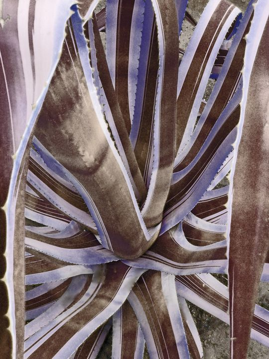 Neutral Cactus - francine mabie