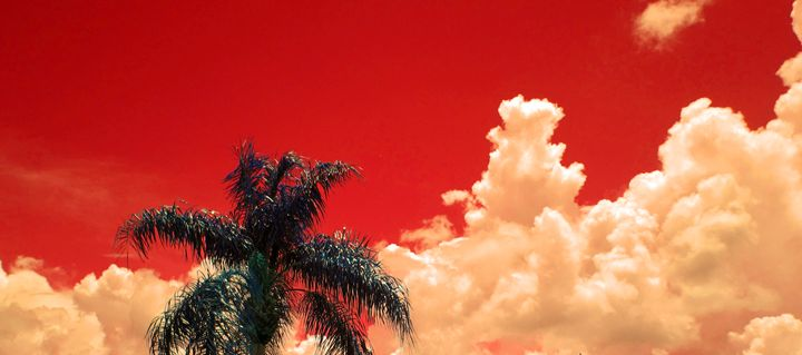 Red Sky with Palm - francine mabie