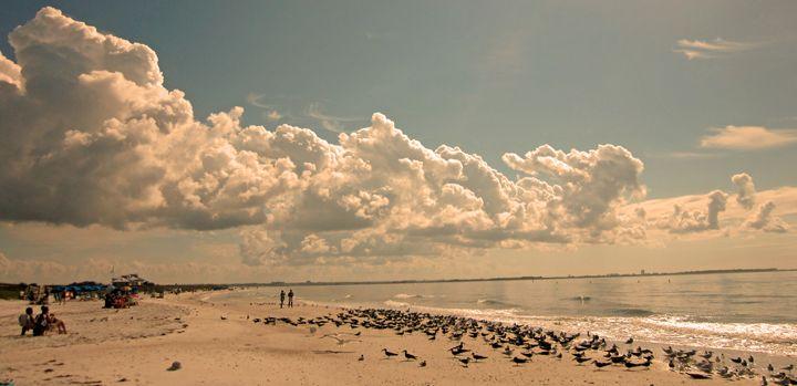The Coastline - francine mabie