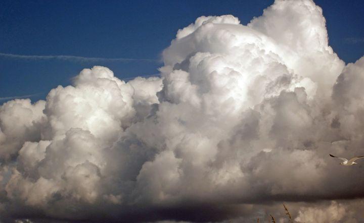 Clouds with bird II - francine mabie