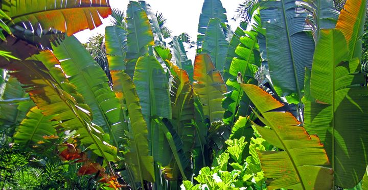Green Tropical Leaves - francine mabie