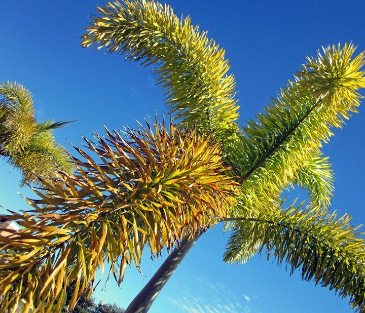Green Palms against Blue Sky - francine mabie