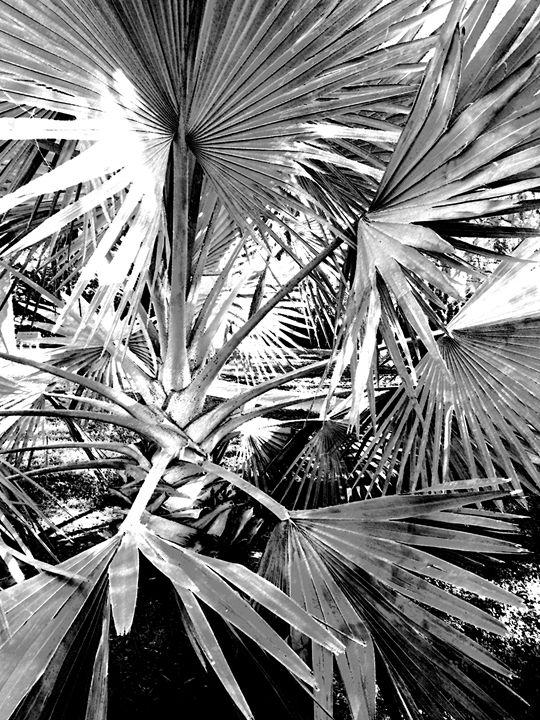 Fan Palm - francine mabie