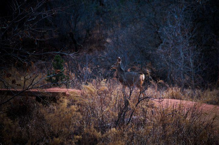Call of the Wild I - Evelyn Monáe Blackwood