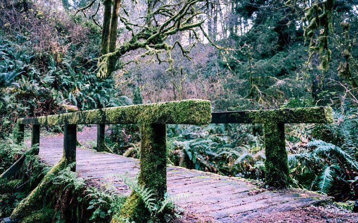 Moss Bridge - Caleb French Photography