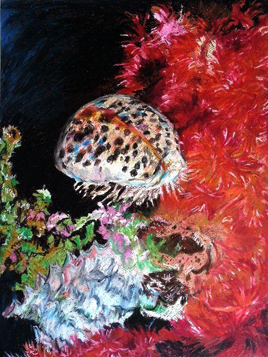 Tiger Cowrie - Kiwi Kiwi