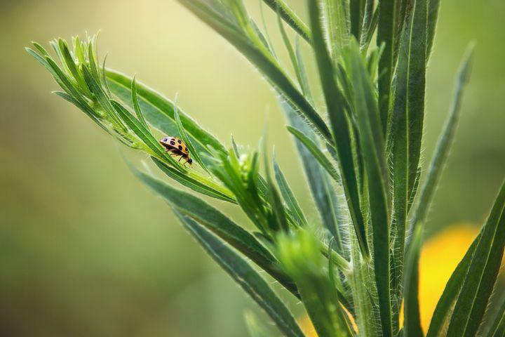Ladybug Walking - Sharon McConnell
