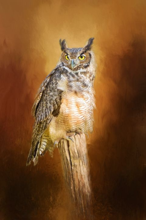 Great Horned Owl In Autumn - Sharon McConnell
