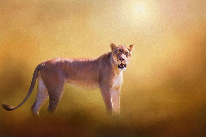 Lioness In The Golden Sun - Sharon McConnell