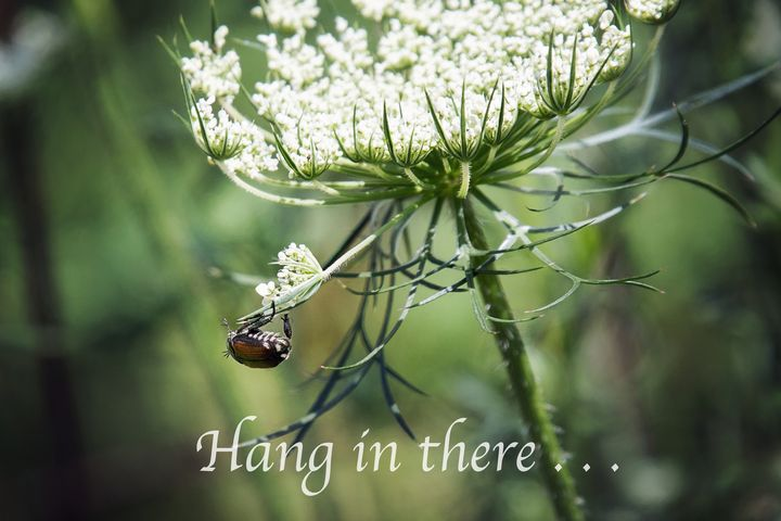 Hang In There - Sharon McConnell