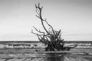 Driftwood At Dusk Black And White