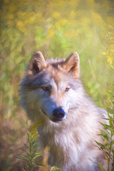 Gray Wolf Watchful - Sharon McConnell