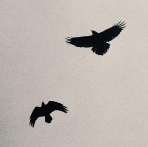 2 birds no stone
