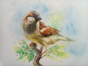 Sparow - Ssjohnhewin art n craft