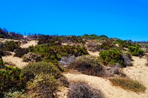 Malibu Desert Plants