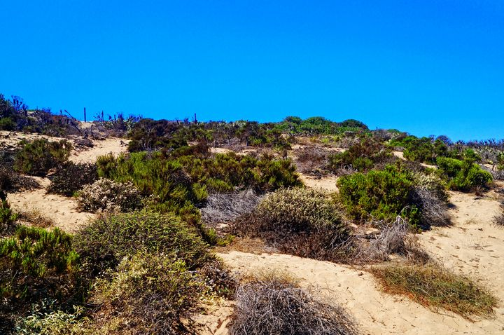 Malibu Desert Plants - Anna Karin Photography