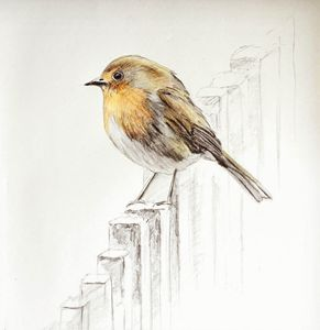 Yellow Robin - Pen N Pencil