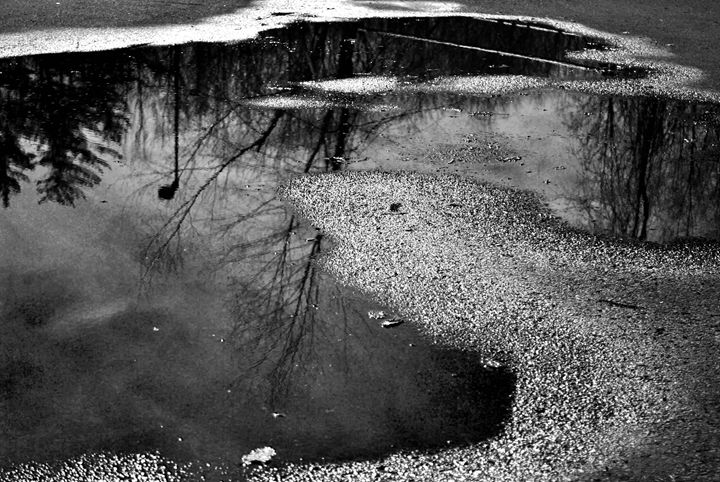 Puddle Reflections - Kelly Anne Photography