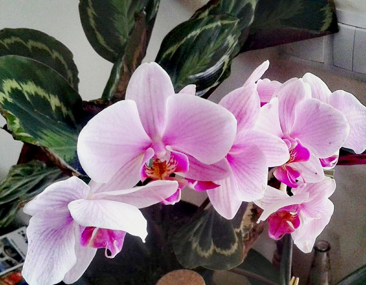 Pink Orchids - Ema's Art