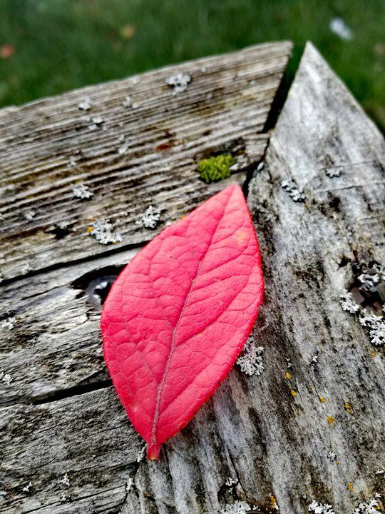 Autumn Red - Ema's Art