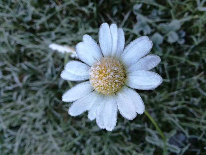 frozen flower - Ema's Art