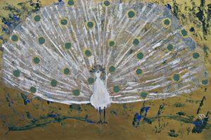 The Aqua Peacock