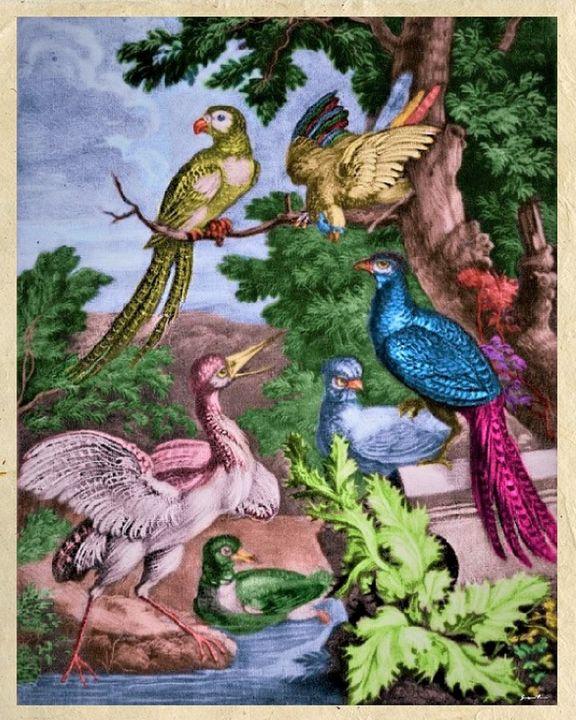 Birds of Paradise by Jeanpaul Ferro - Jeanpaul Ferro