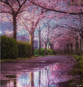 Cherry Blossoms by Jeanpaul Ferro