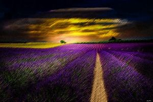 Lavender & Sunset by Jeanpaul Ferro