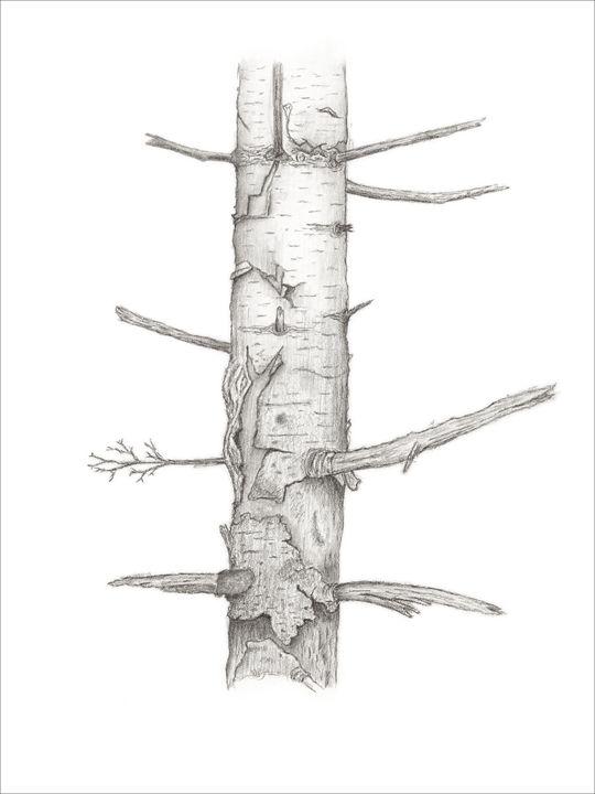 Birch - Tammy Liu-Haller