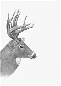 White-tailed Deer - Tammy Liu-Haller